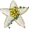 Star Tribute in Yellow with Ivy